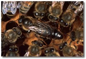 Renewed Cost-sharing Program for Pesticide Analysis of Honey Bee Colony Matrices
