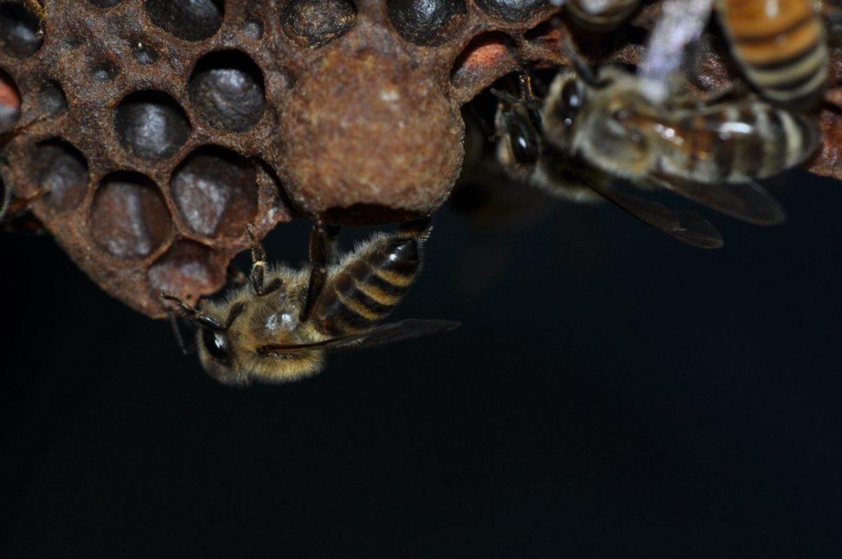 Value of Honey Bees