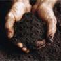 hands in soil